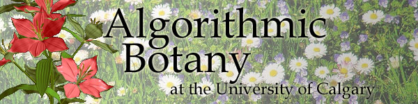 Algorithmic Botany at the University of Calgary